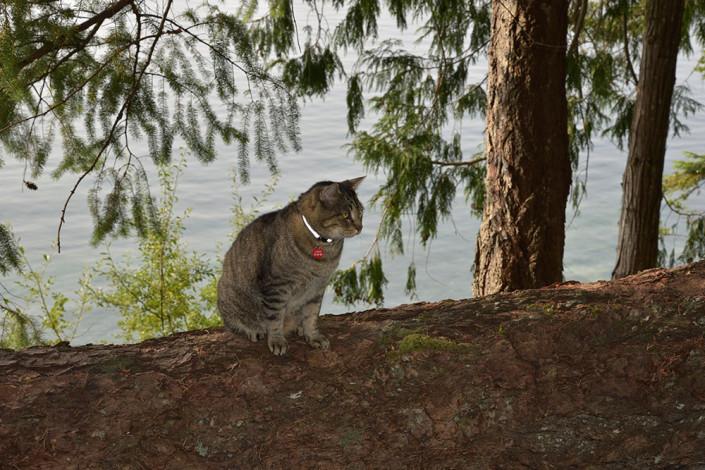 Skipping Stone Cat