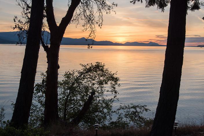 Arbutus Sunset